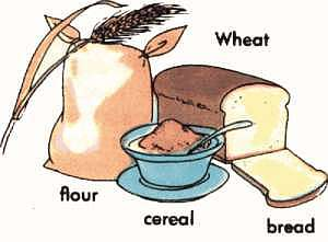 wheat products; arthursclipart.com